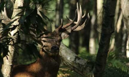 Jelen Premier Wildlife Services
